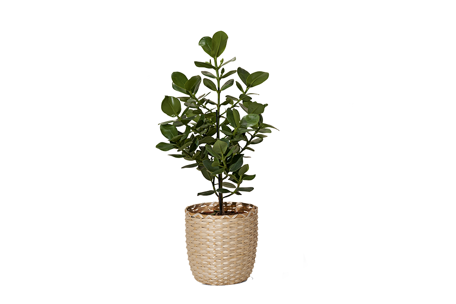 plant-900x600.png